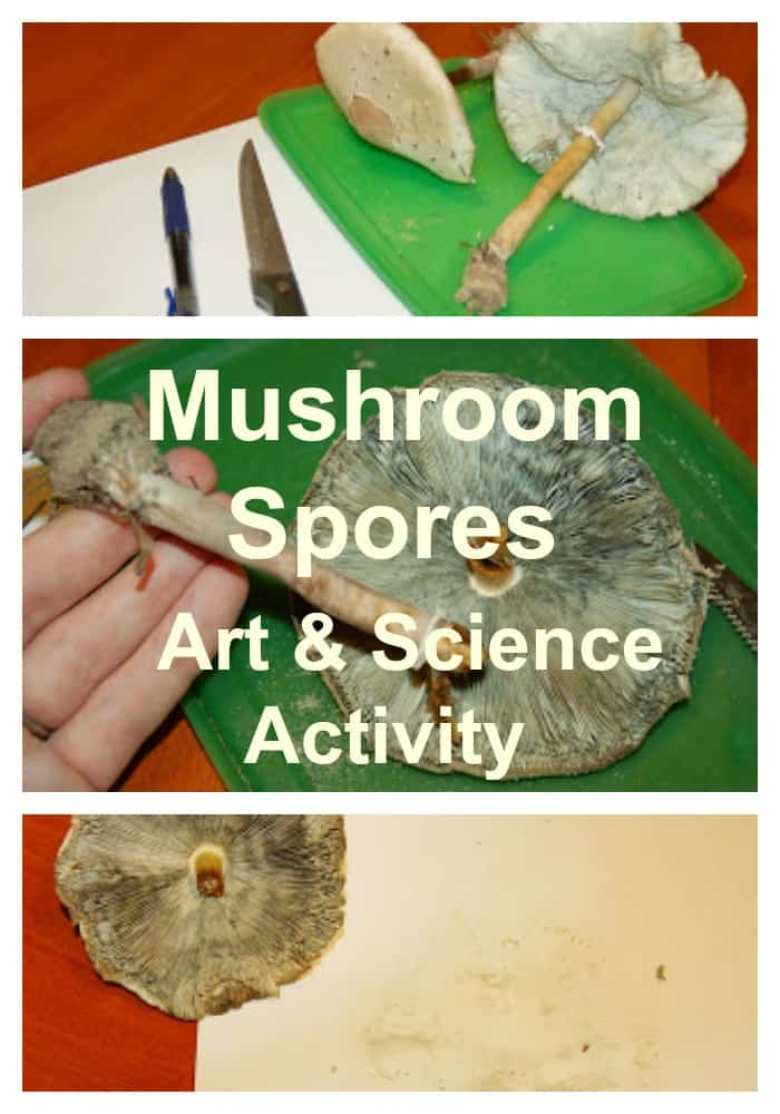 Mushroom Spores Art & Science Activity