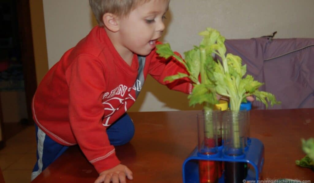 boy putting celery in water