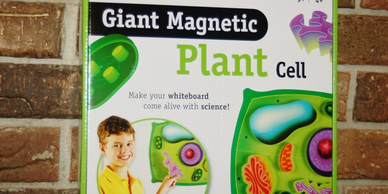 Giant Magnetic Plant Cell by Learning Resources