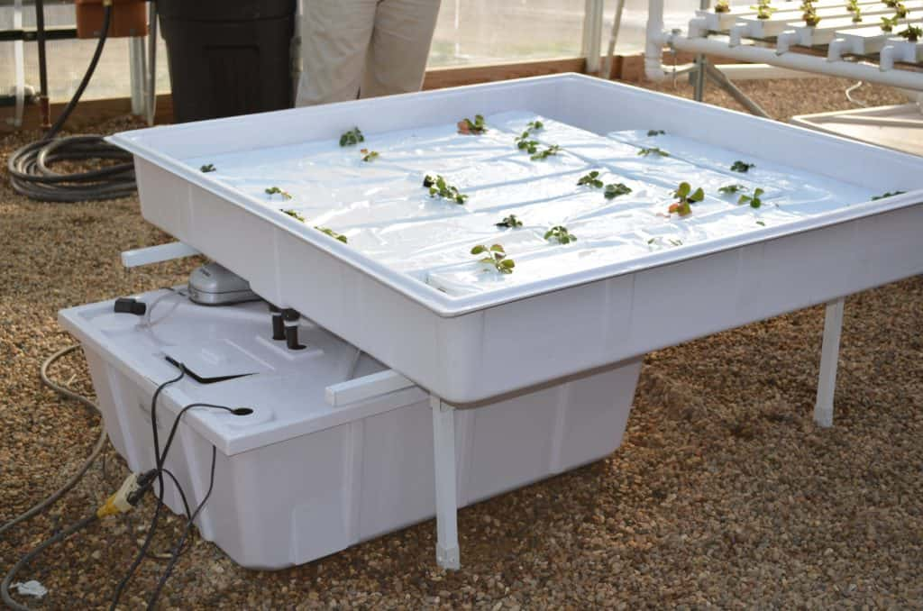 ebb and flow hydroponic system at Farmtek greenhouse