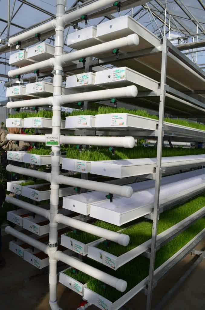 Farmtek hydroponic fodder system in greenhouse