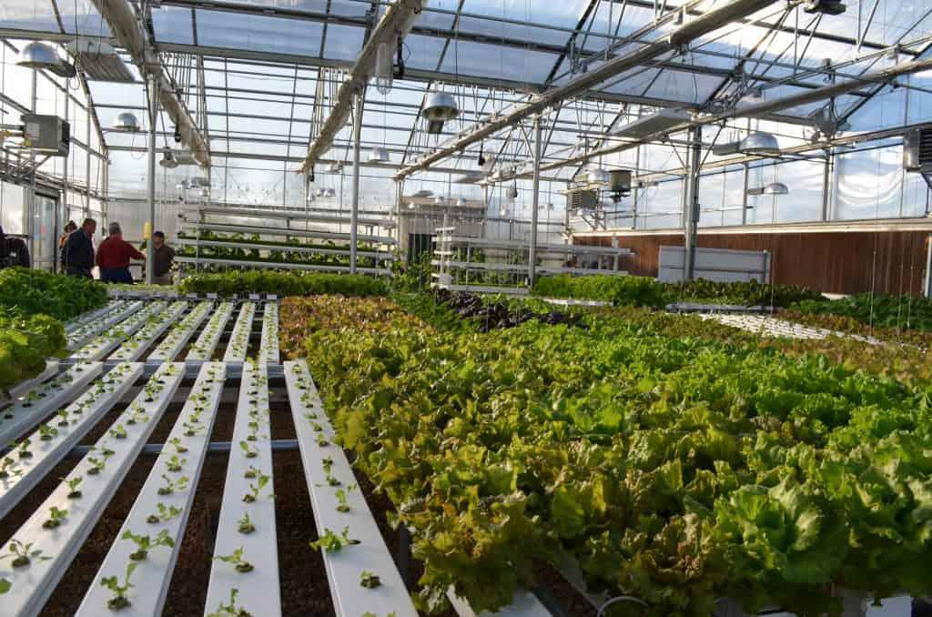 Farmtek hydroponics garden