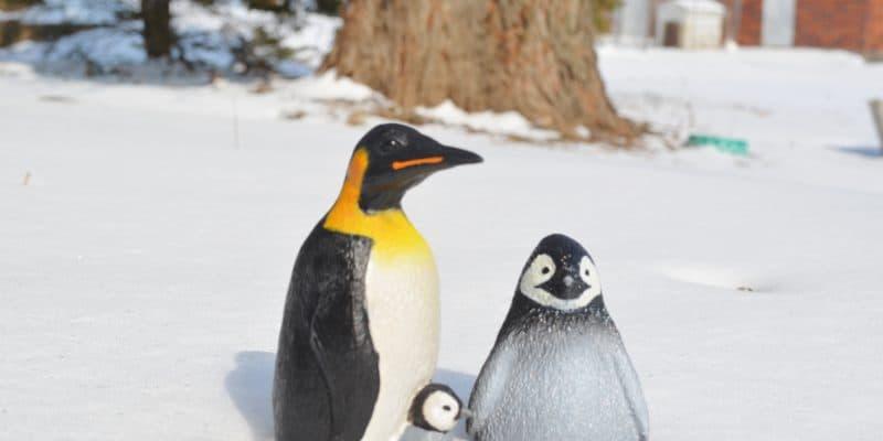 Penguins Toob & Emperor Penguin by Safari Ltd. Review