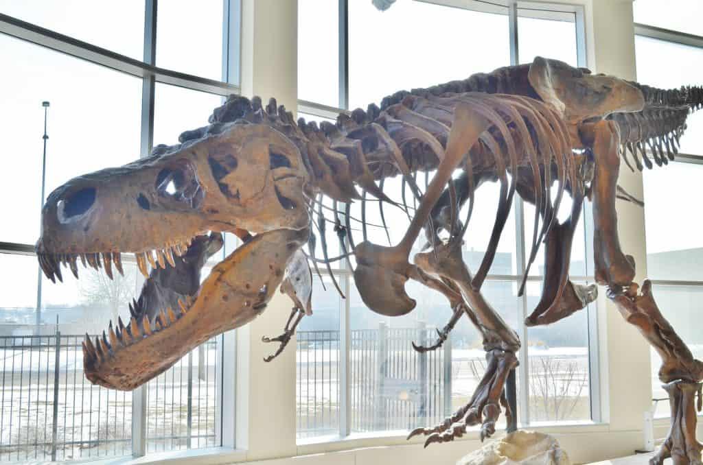 TRex Dinosaur Sue