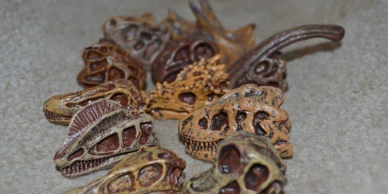 Safari Ltd. Dinosaur Skulls TOOB – Great for Fossil Birthday Parties!