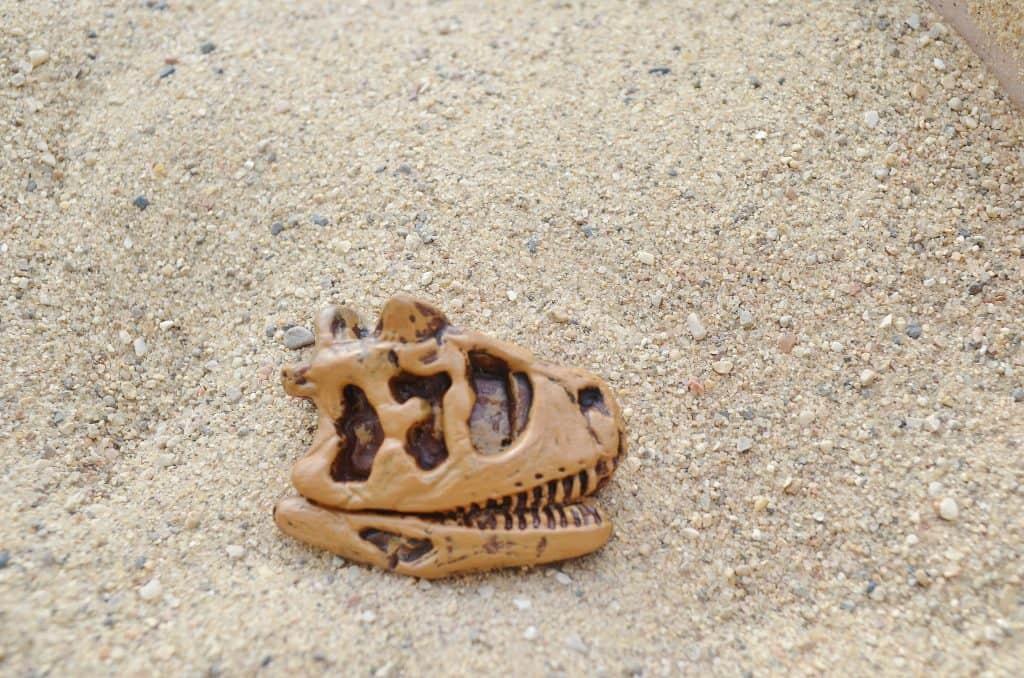Safari Ltd Dinosaur Skull Fossil TOOB