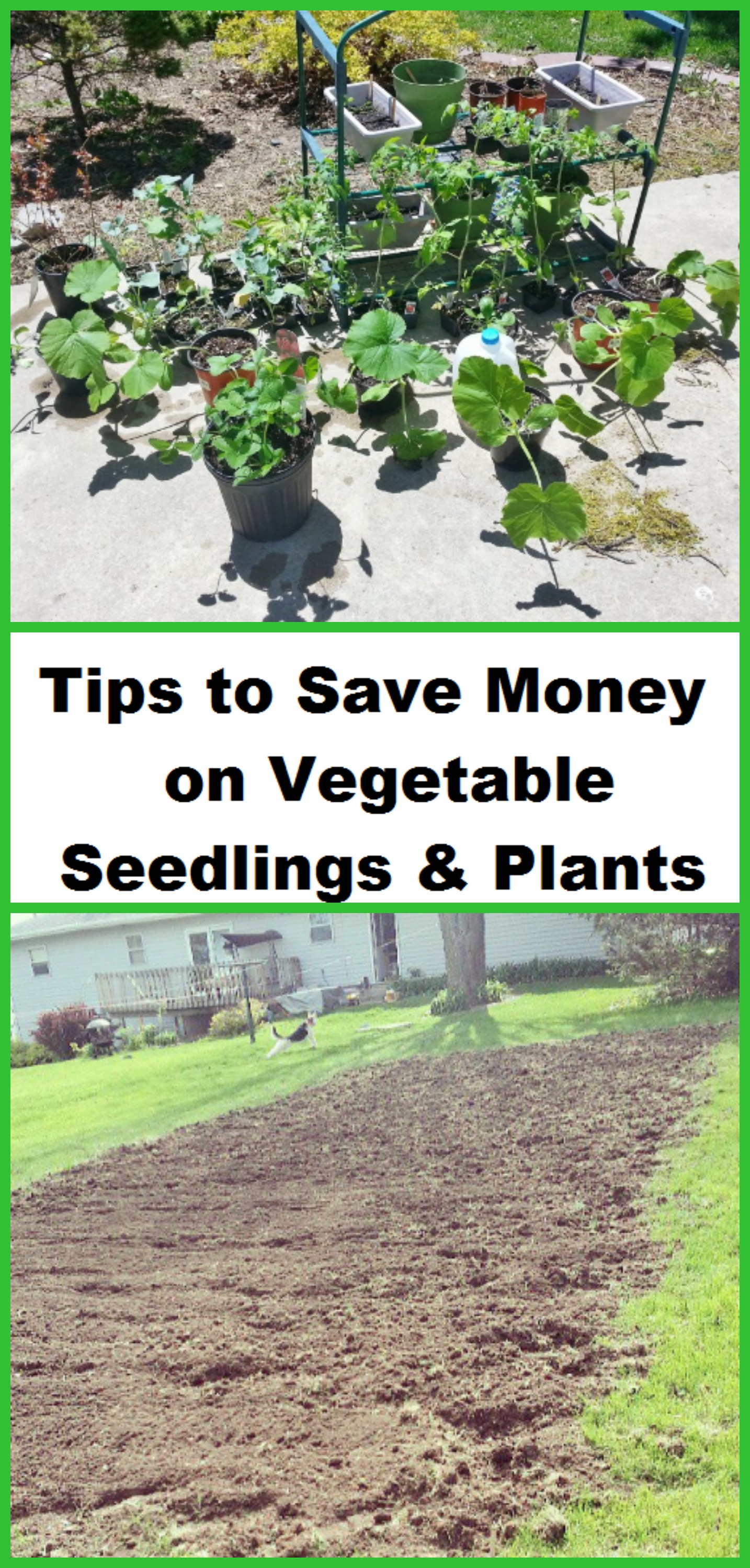 Tips to Save Money on Vegetable Seedlings and Plants