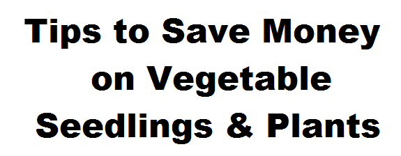 Tips to Save Money on Vegetable Seedlings & Plants