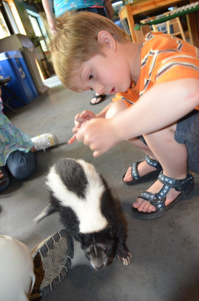 little boy with a skunk at the zoo