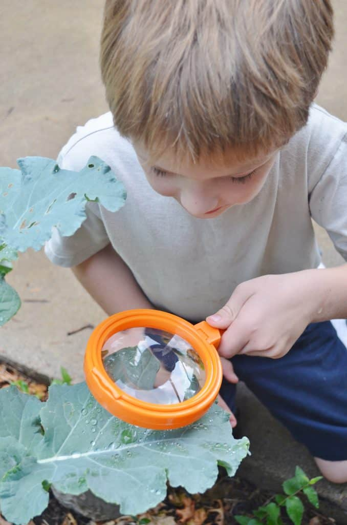 Learning Resources Magnifying Glasses