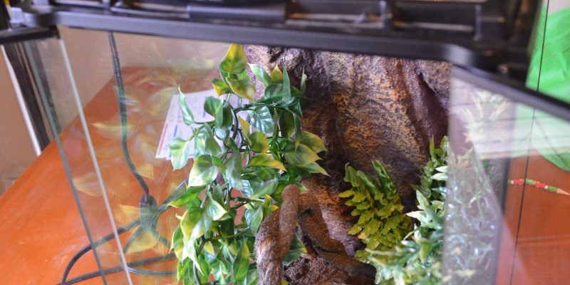 Thrift Store Thursday – Reptile Aquarium Tank #ThriftStoreThursday