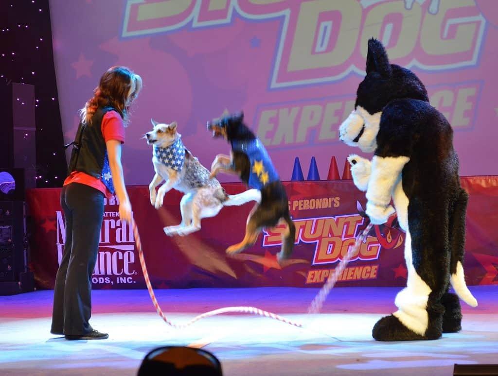 Stunt Dog Experience Branson MO