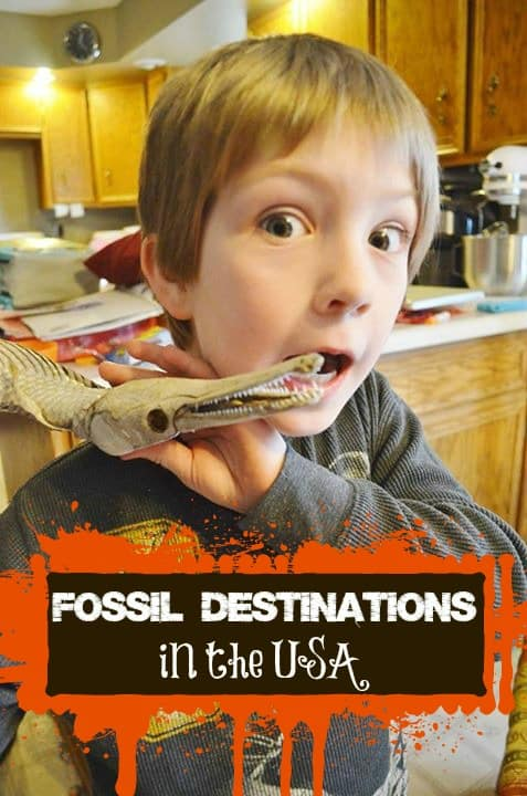 fossil destinations in the usa