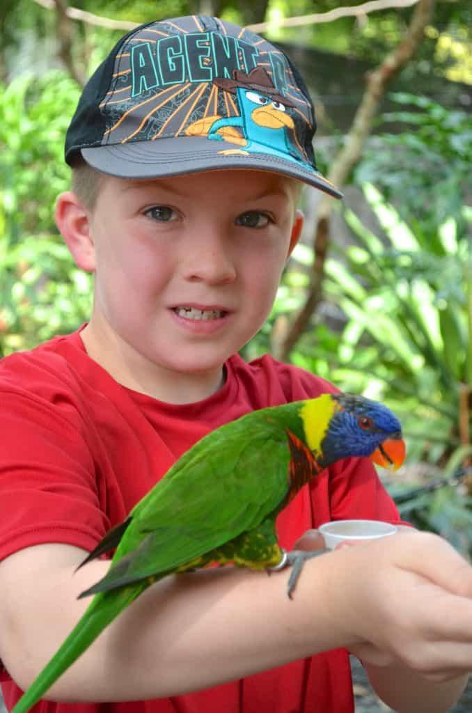 boy holding a lorikeet at Lowry Park Zoo in Tampa Florida
