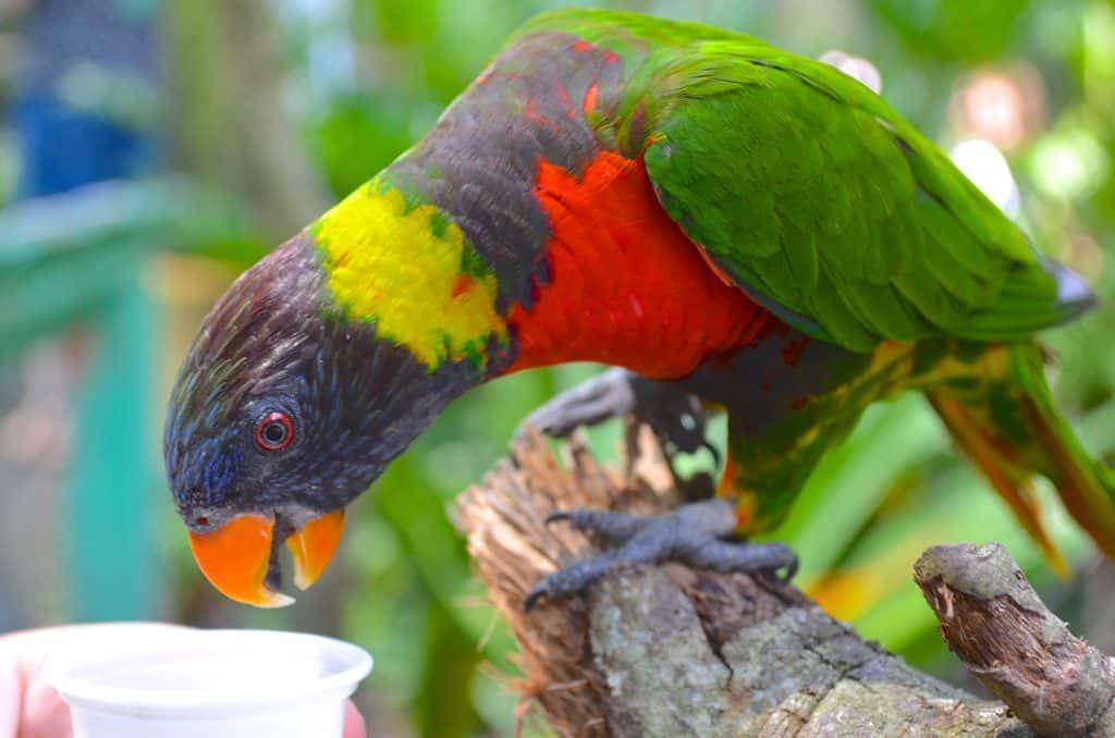 feeding a lorikeet bird at Lowry Park Zoo in Tampa Florida