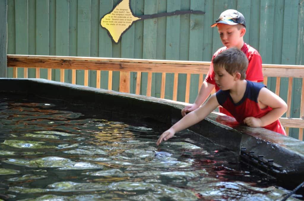 petting stingrays at Lowry Park Zoo Tampa Florida