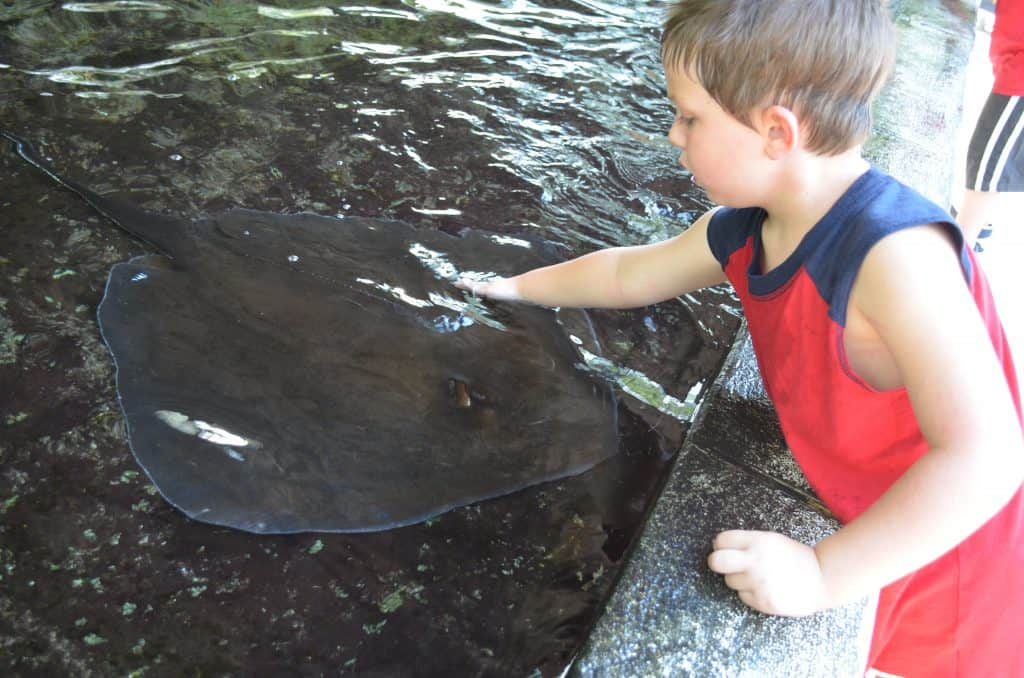 petting a stingray at Lowry Park Zoo Tampa Florida