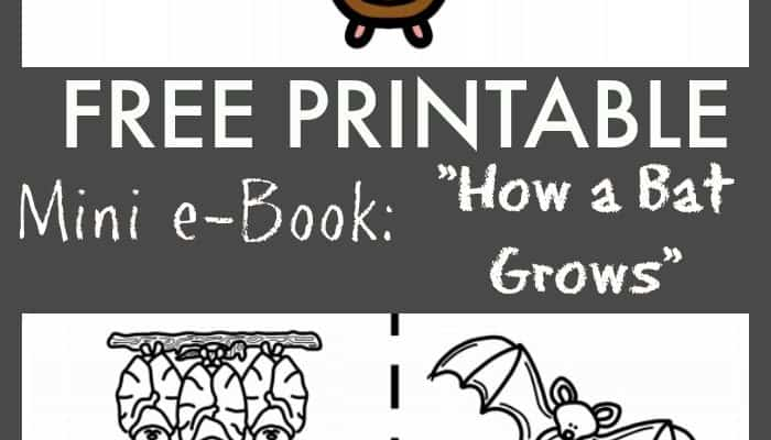 "FREE ""How a Bat Grows"" Printable eBook"