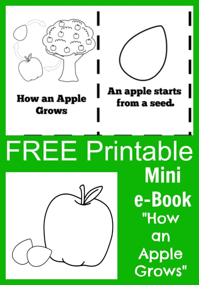 image regarding Apple Life Cycle Printable identify Totally free Apple Everyday living Cycle Printable e-E book for Young children
