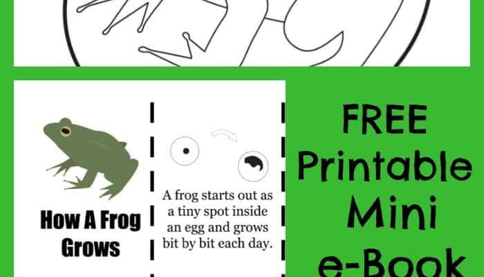 printable frog life cycle book