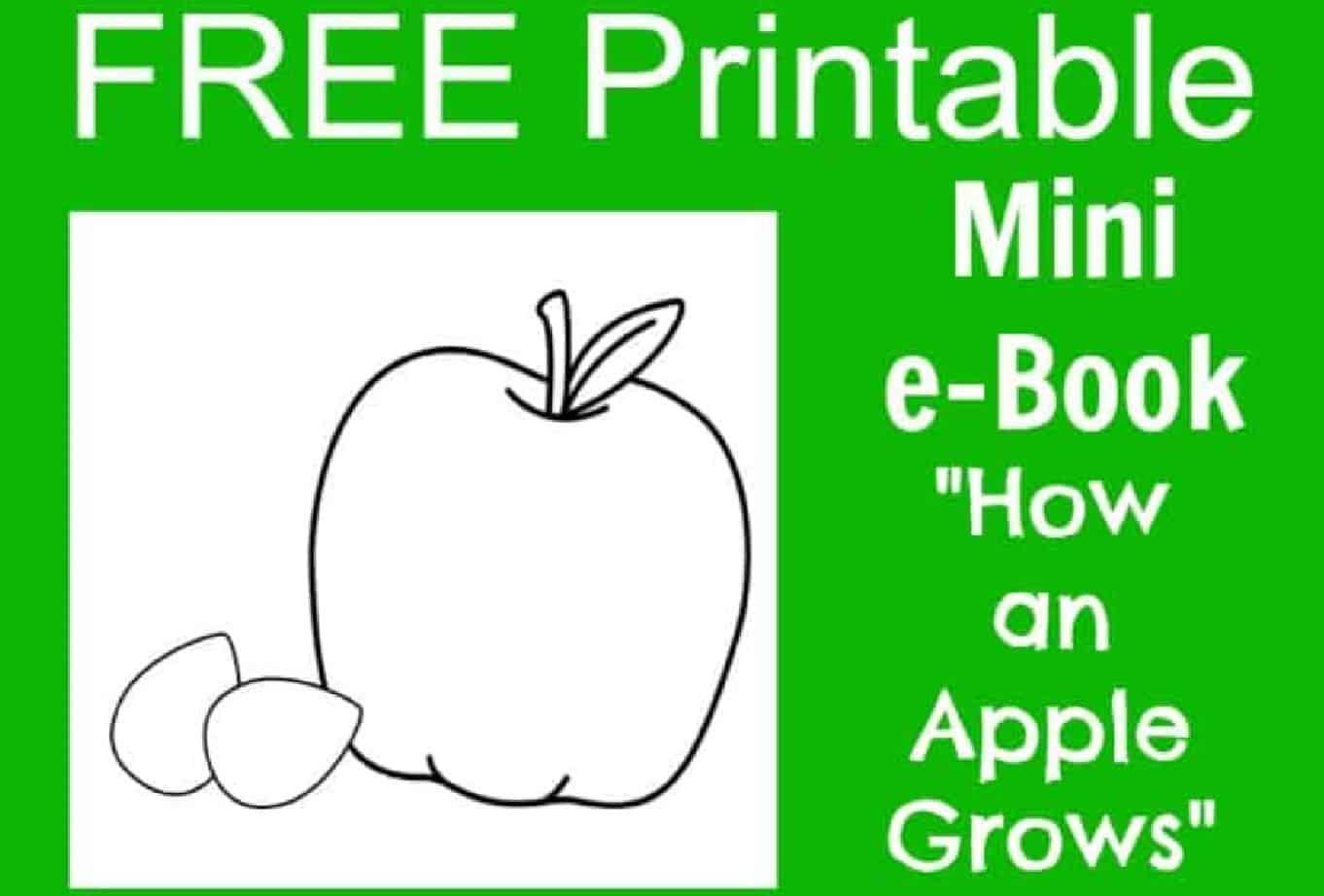 Free Apple Life Cycle Printable E Book For Kids