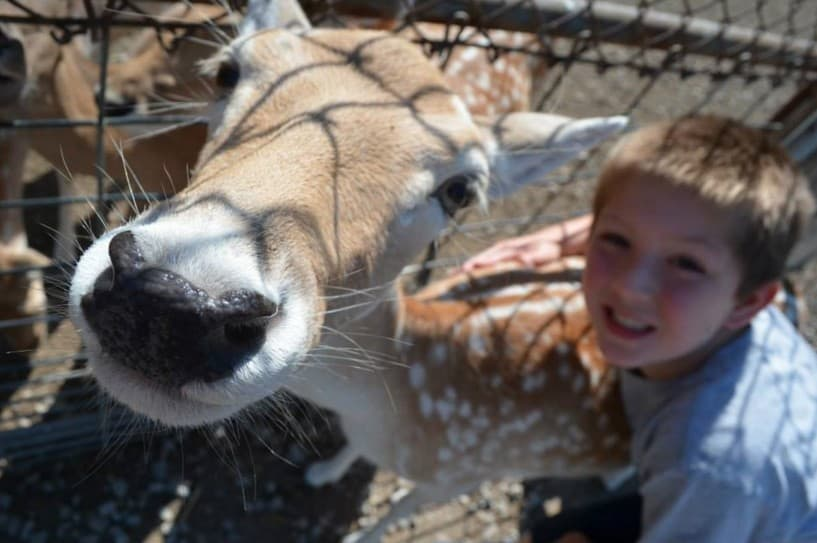 Wildlife Conservation with Kids
