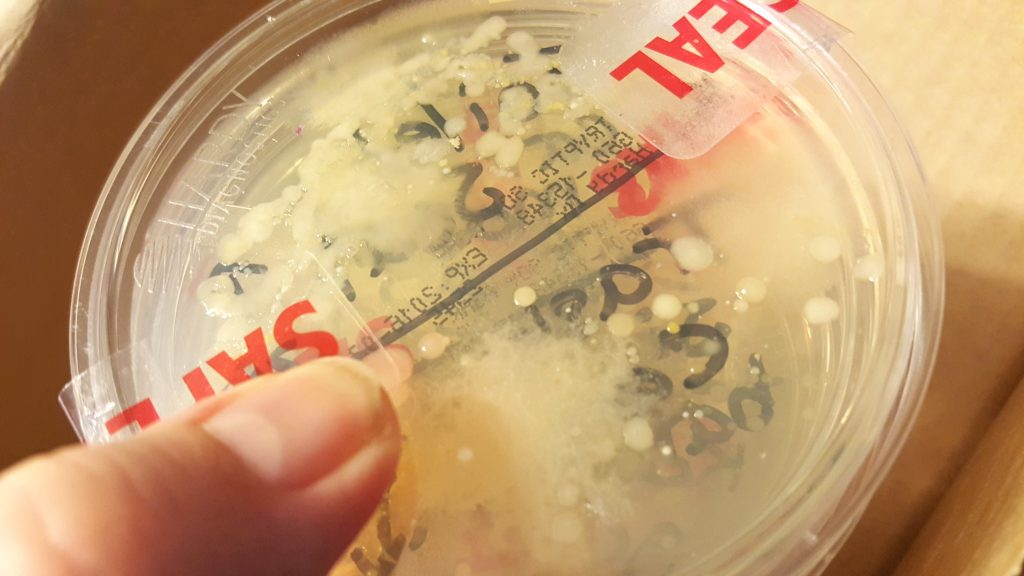 petri dish of bacteria