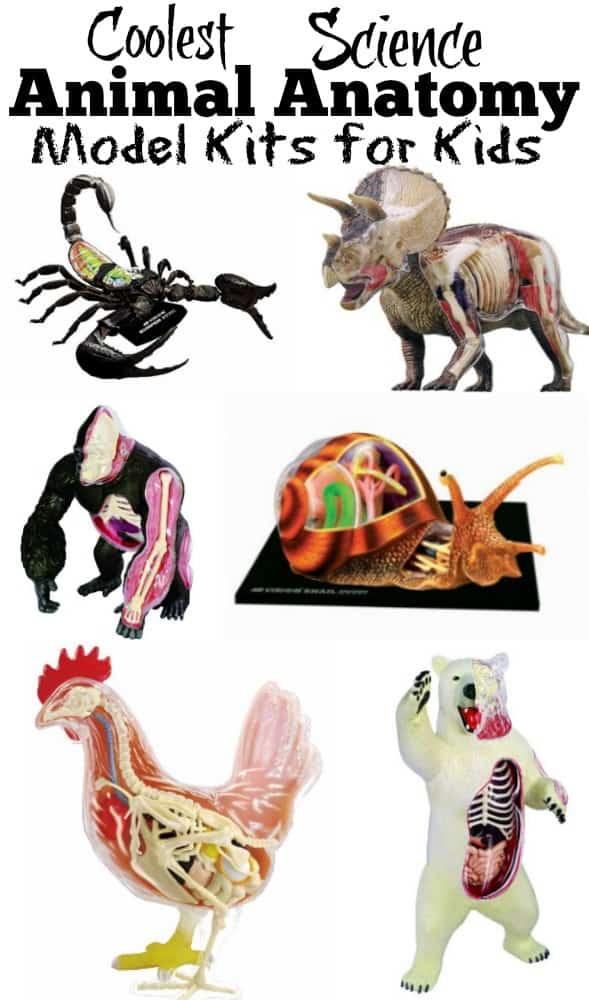 Coolest Science Animal Anatomy Model Kits for Kids