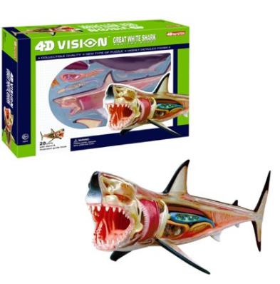 4D Shark Anatomy Model for Science