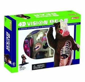 Bear Anatomy Model Science Kit for Kids