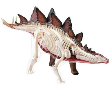 Dinosaur - Stegosaurus Anatomy Model Science Kit for Kids