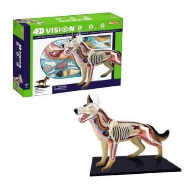 Dog Anatomy Model Science Kit for Kids