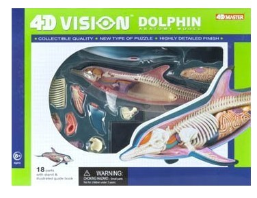 Dolphin Anatomy Science Model Kit for Kids