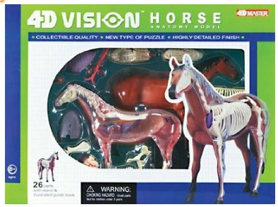 Horse Anatomy Model Science Kit for Kids