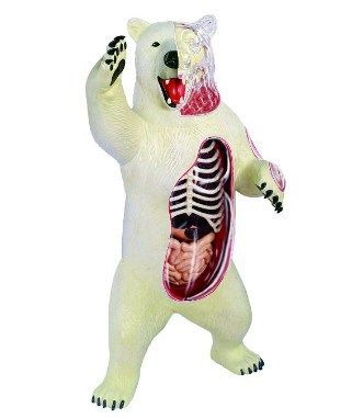 Polar Bear Anatomy Model Science Kit for Kids