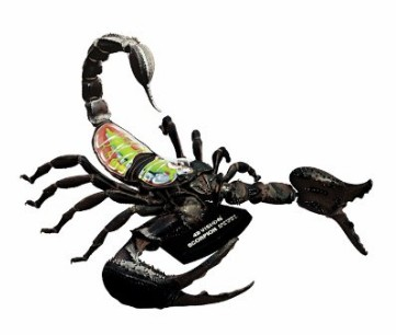 Scorpion Anatomy Science Model Kit for Kids