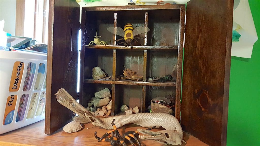 science curio cabinet of rocks and bugs
