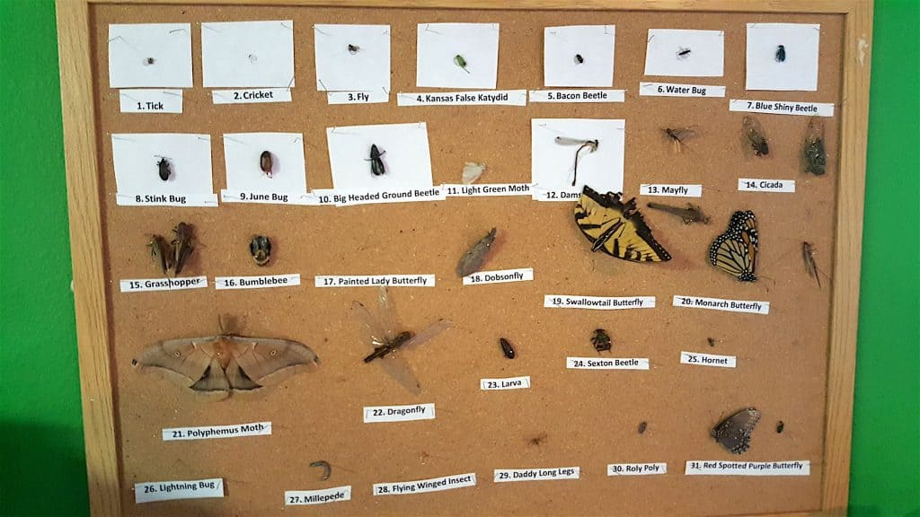 scientific bug display board