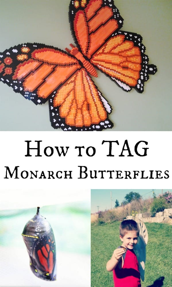 How to Tag Monarch Butterflies