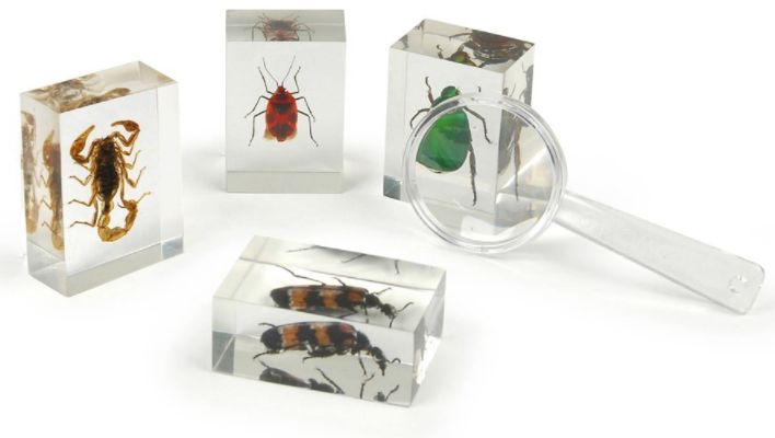 real insect bug blocks