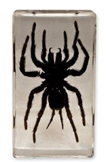 Real Tarantula Paperweight block gift