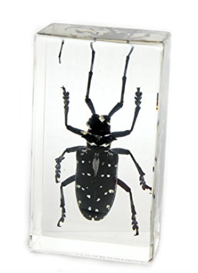 Asian Long Horned Beetle paperweight block gift
