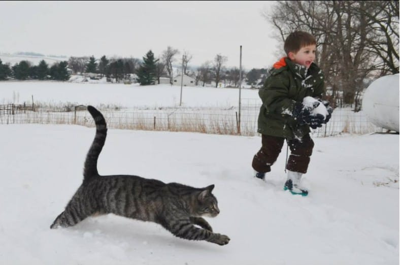 grey striped cat running in snow with boy
