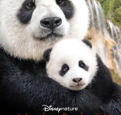 Disneynature Born in China Trailer