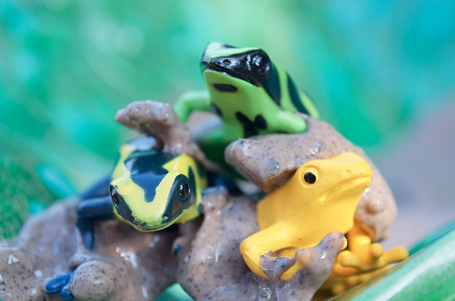 poison dart frogs sitting in mud slime
