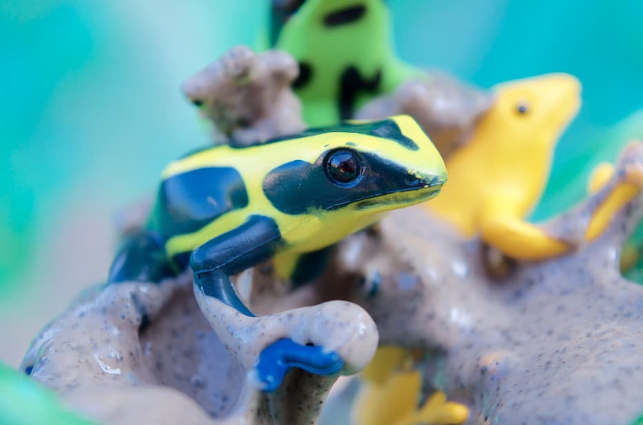 poison dart frog toy from safari ltd toob