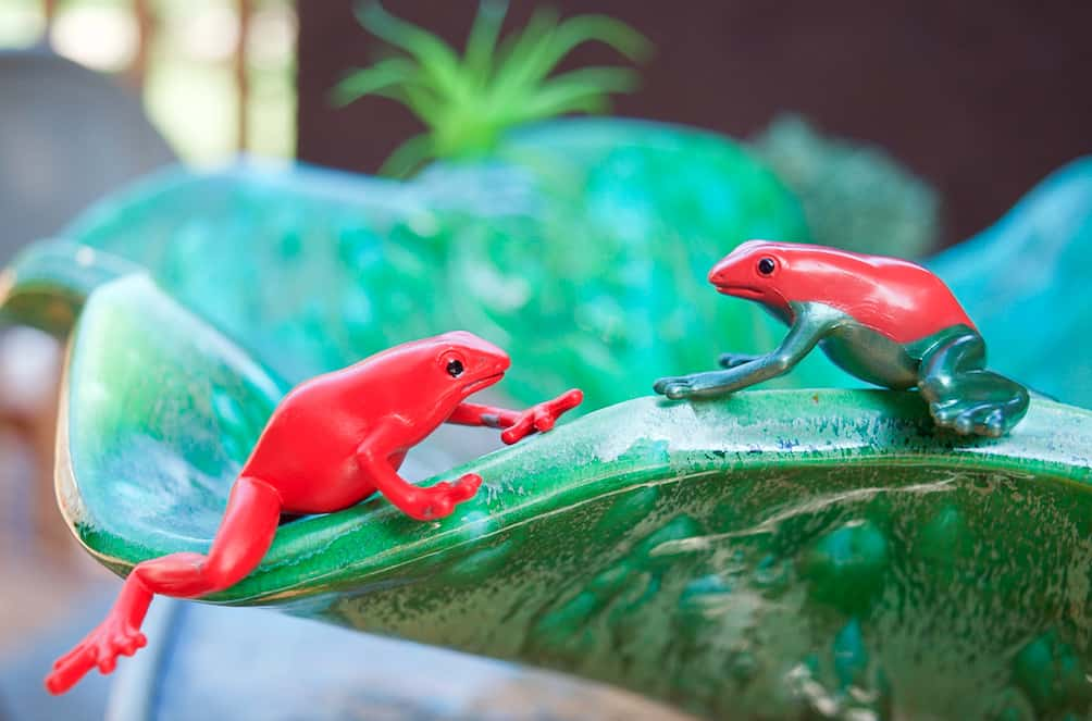 poison dart frogs sitting on green bowl
