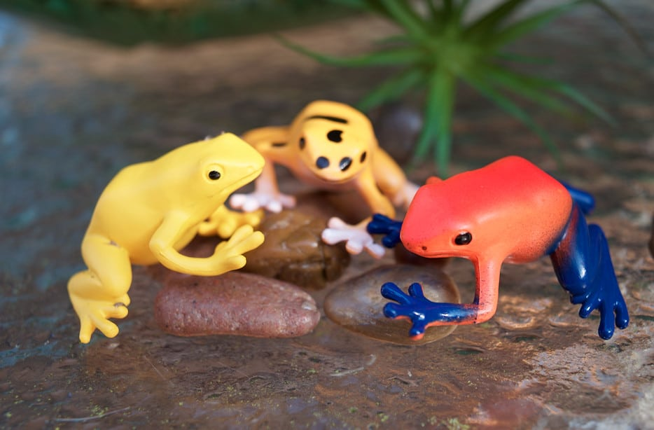 poison dart frog toys from safari ltd toob