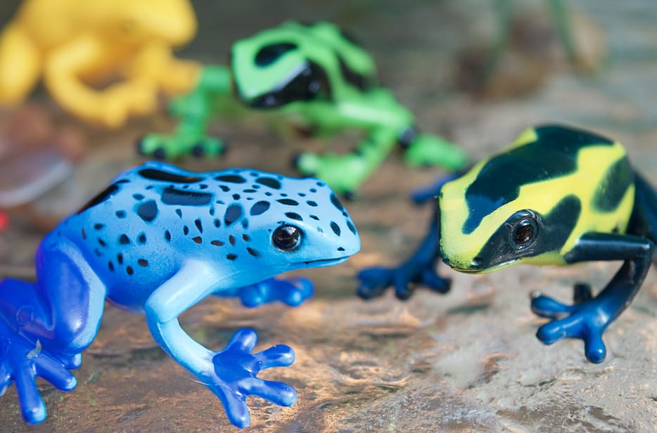 poison dart frogs toys from safari ltd toob