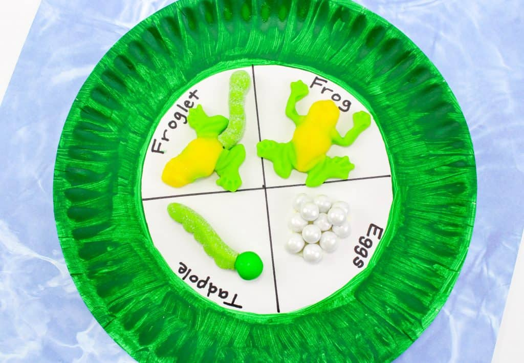 Frog Lifecycle Paper Plate Craft